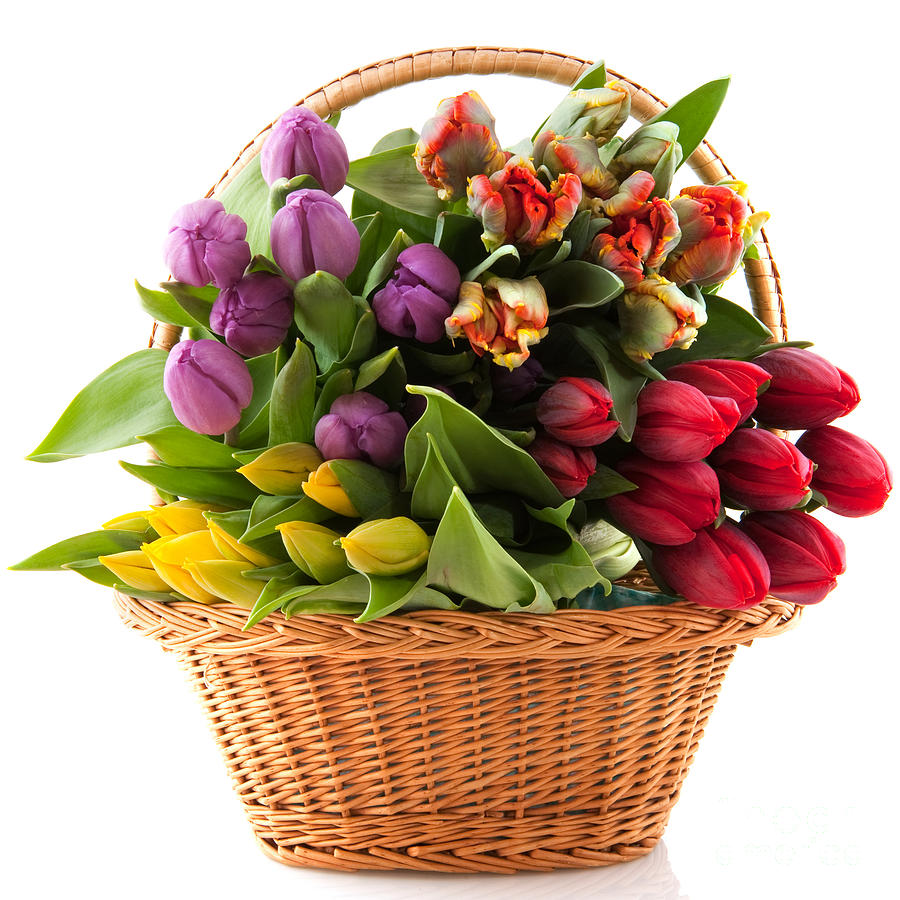 The Flower Basket Photograph