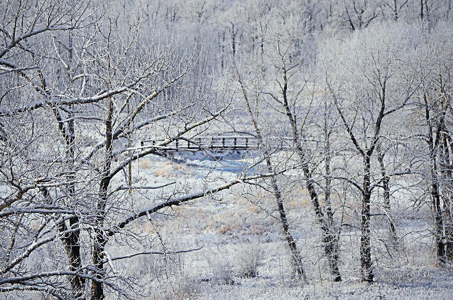 The Frozen Bridge Photograph