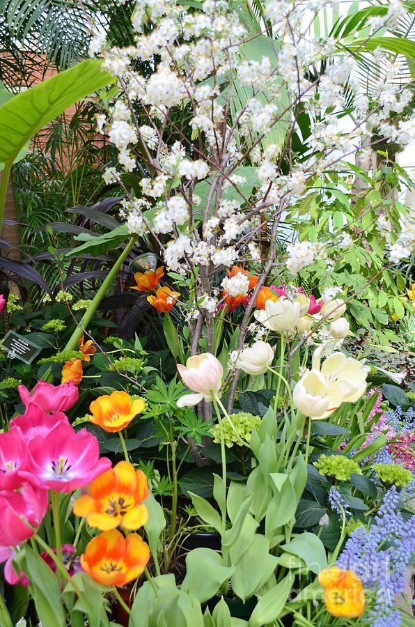 The Gardens Photograph