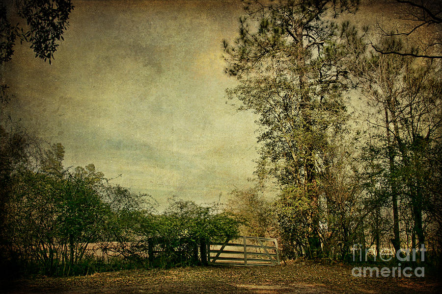The Gate Photograph  - The Gate Fine Art Print