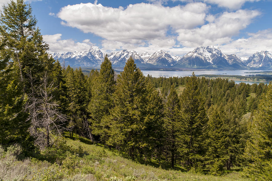 The Grand Tetons From Signal Mountain - Grand Teton National Park Wyoming Photograph
