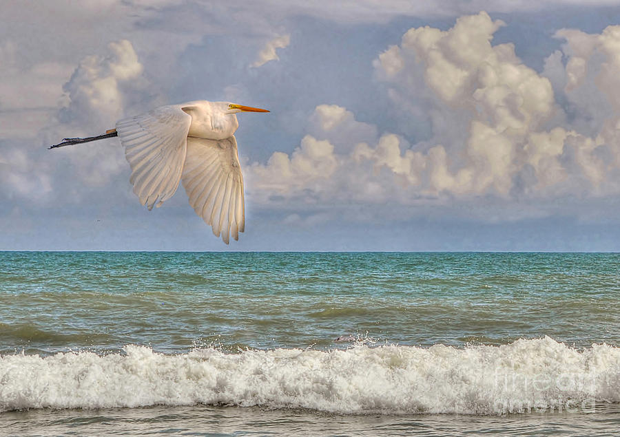 The Great Egret And The Ocean Photograph