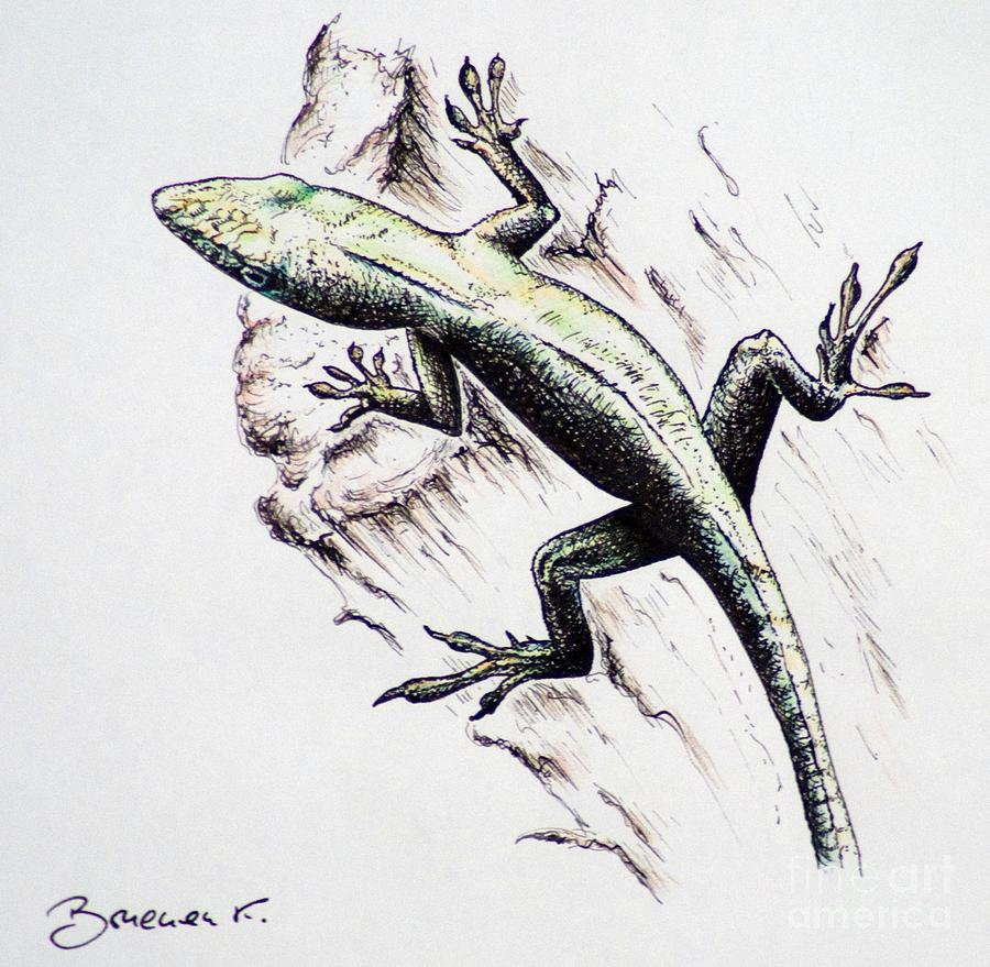 The Green Lizard Drawing By Katharina Filus