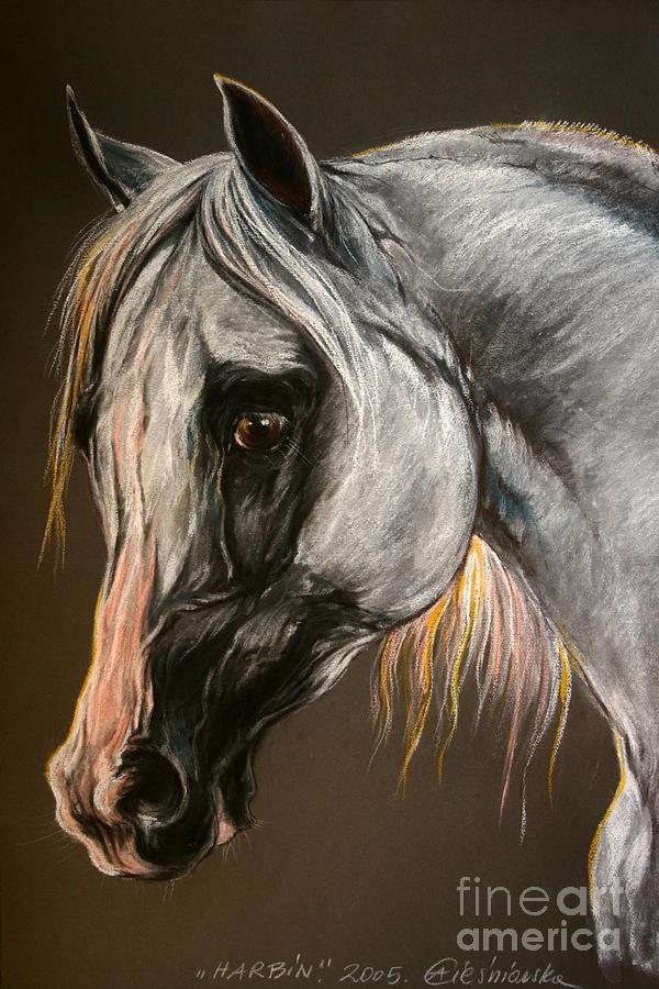 Horse Drawing - The Grey Arabian Horse by Angel  Tarantella