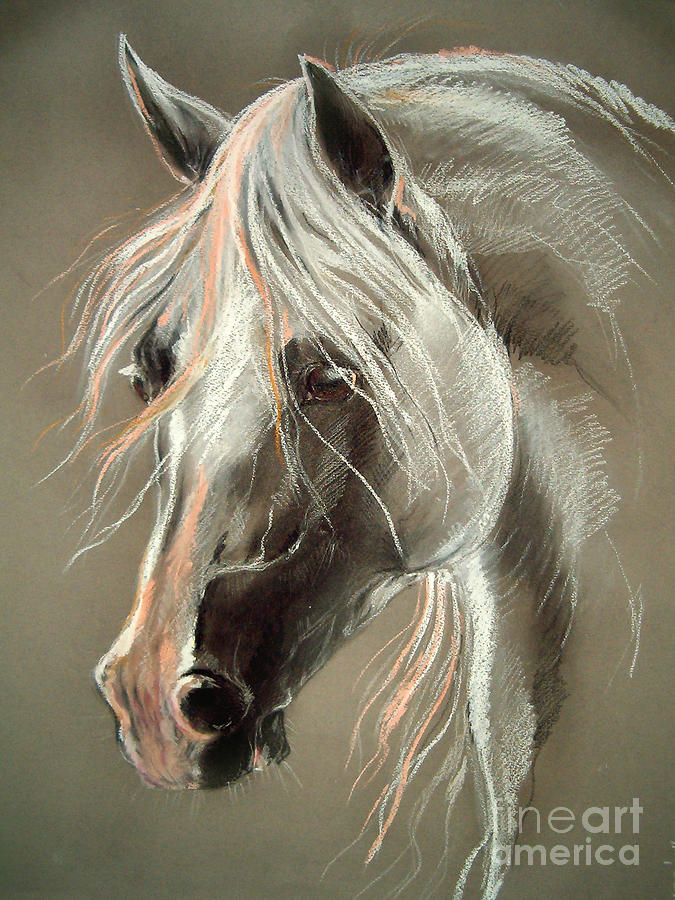 The Grey Horse Soft Pastel Drawing