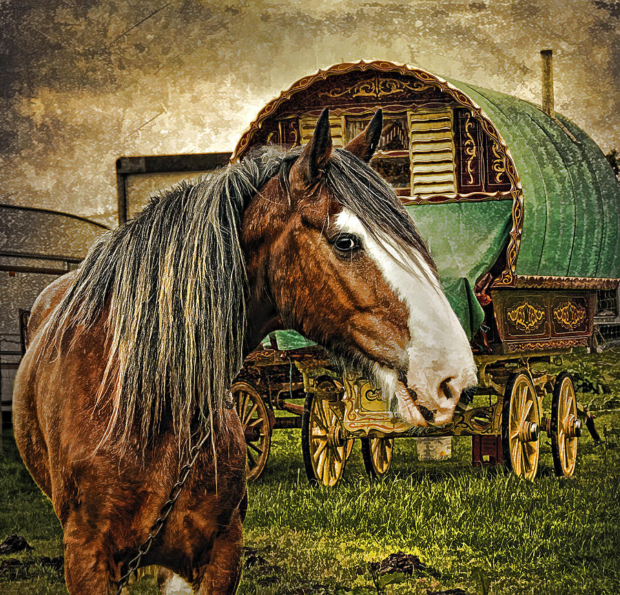 Gypsy Vanner Horse Tour