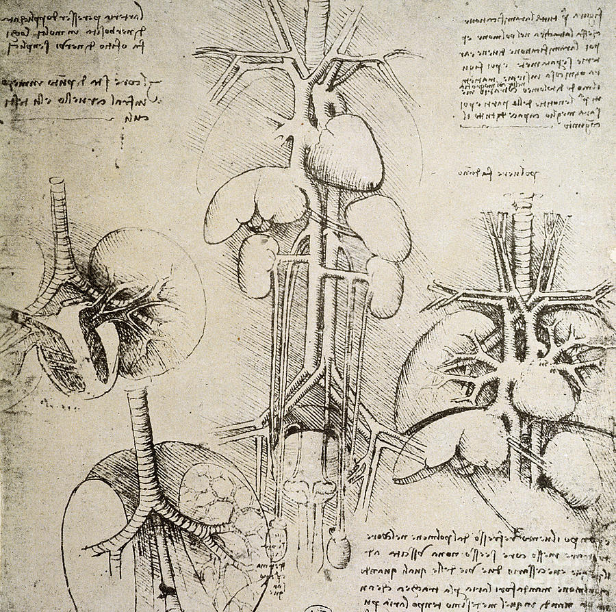 leonardo da vinci on Pinterest