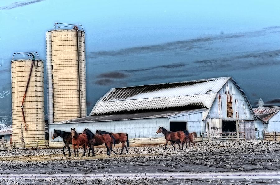 The Horse Barn Photograph