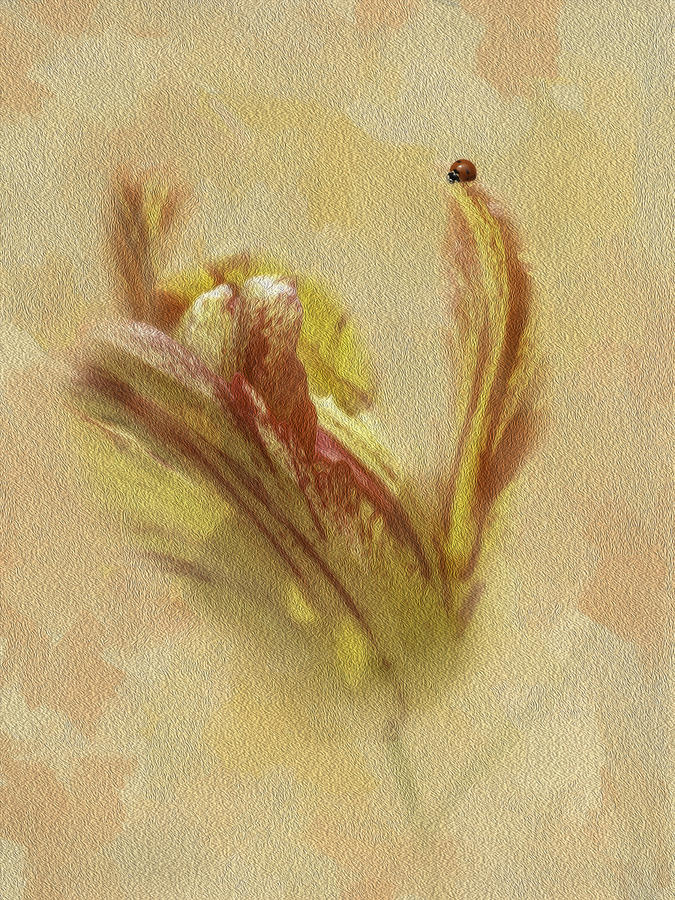 The Lady And The Parrot Tulip Photograph  - The Lady And The Parrot Tulip Fine Art Print