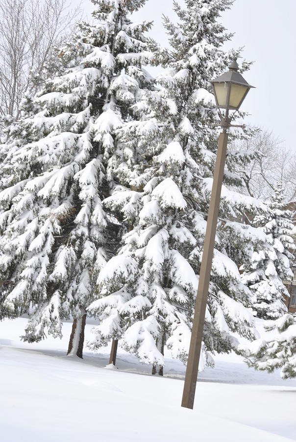 Snow Photograph - The Lamp And The Tree by Frederico Borges