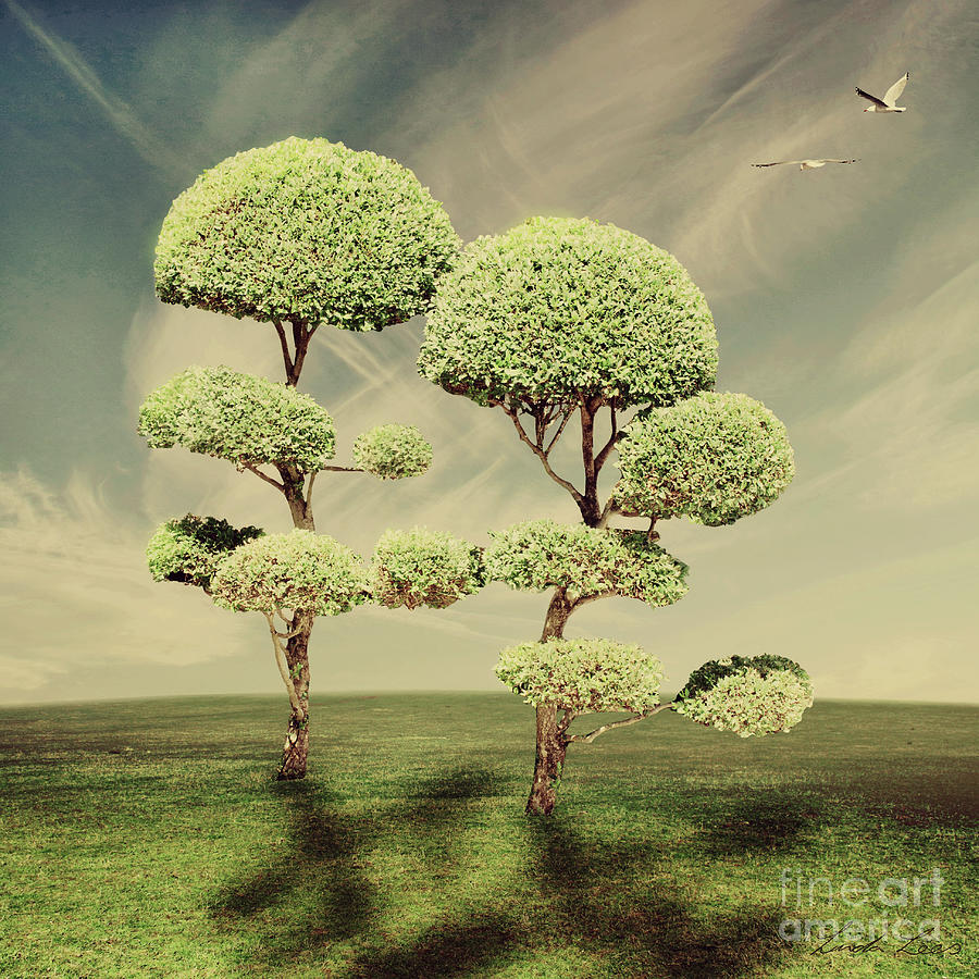 The Land Of The Lollipop Trees Photograph  - The Land Of The Lollipop Trees Fine Art Print