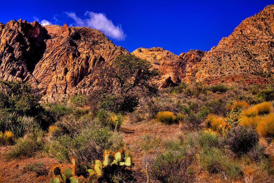 Image gallery nevada landscape for Landscaping rock reno nv