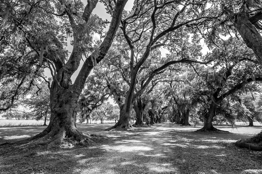 The Lane Bw Photograph  - The Lane Bw Fine Art Print