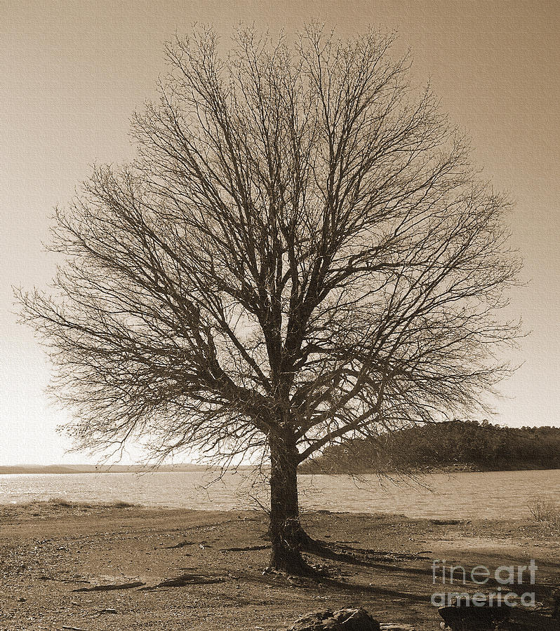 Oak Photograph - The Last Oak by R McLellan