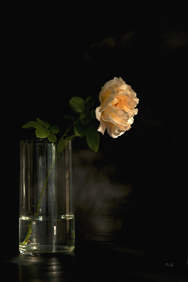 The Last Rose Of Summer Photograph