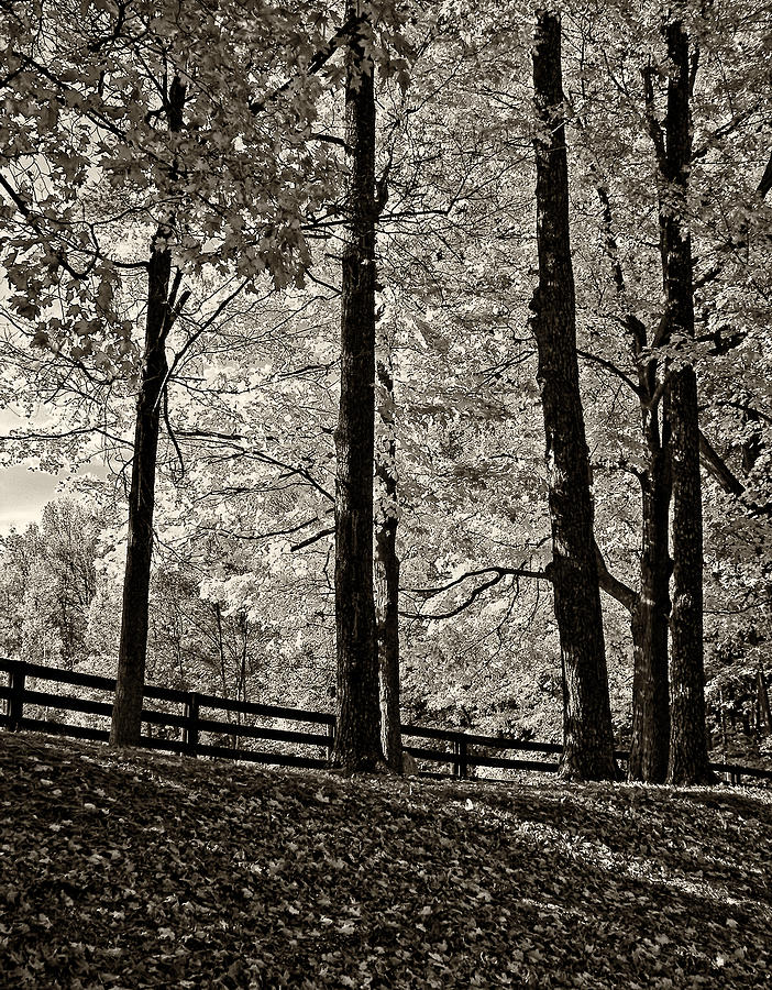 The Less Traveled Sepia Photograph  - The Less Traveled Sepia Fine Art Print