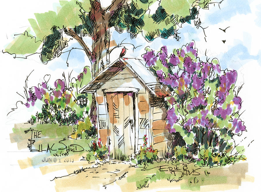 The Lilac Shed Drawing  - The Lilac Shed Fine Art Print