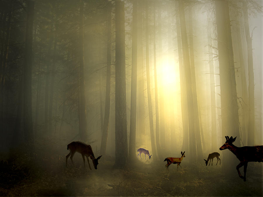 The Magic Of Sunrise is a photograph by Diane Schuster which was ...