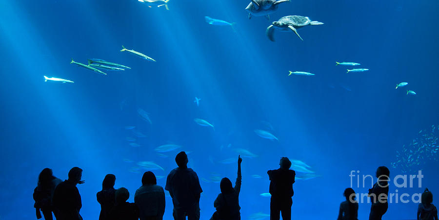 Open Sea Exhibit Photograph - The Magnificent Open Sea Exhibit At The Monterey Bay Aquarium. by Jamie Pham