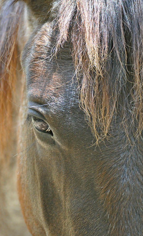 The Mane Eye Photograph  - The Mane Eye Fine Art Print