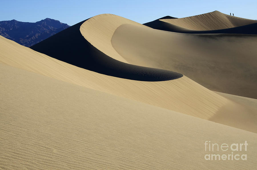 Wind Photograph - The Mesquite Dunes Of California by Bob Christopher