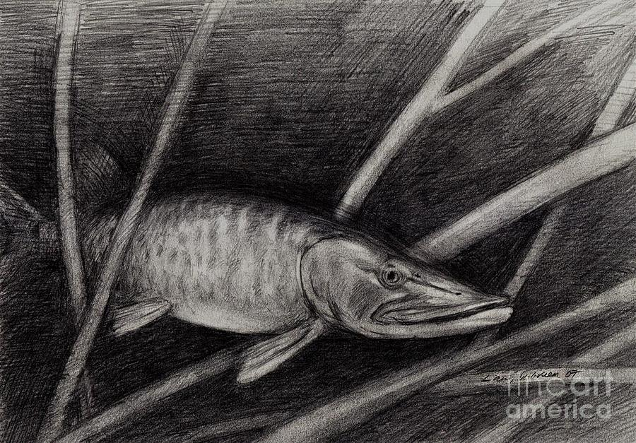 The Musky Drawing  - The Musky Fine Art Print