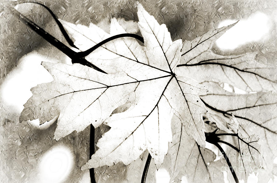 Autumn Photograph - The Mysterious Leaf Abstract Bw by Andee Design