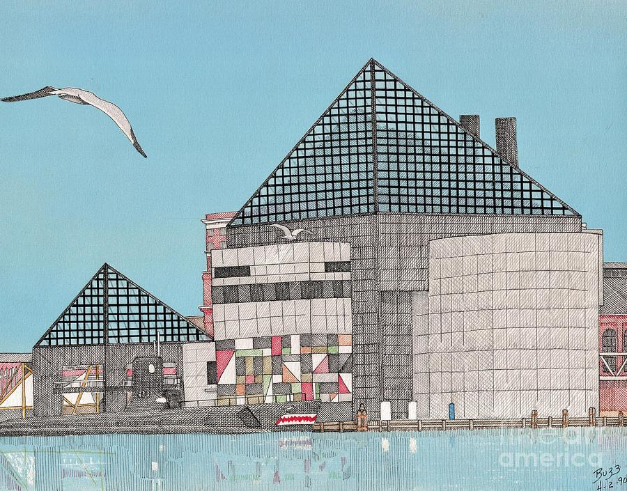 The National Aquarium Drawing  - The National Aquarium Fine Art Print
