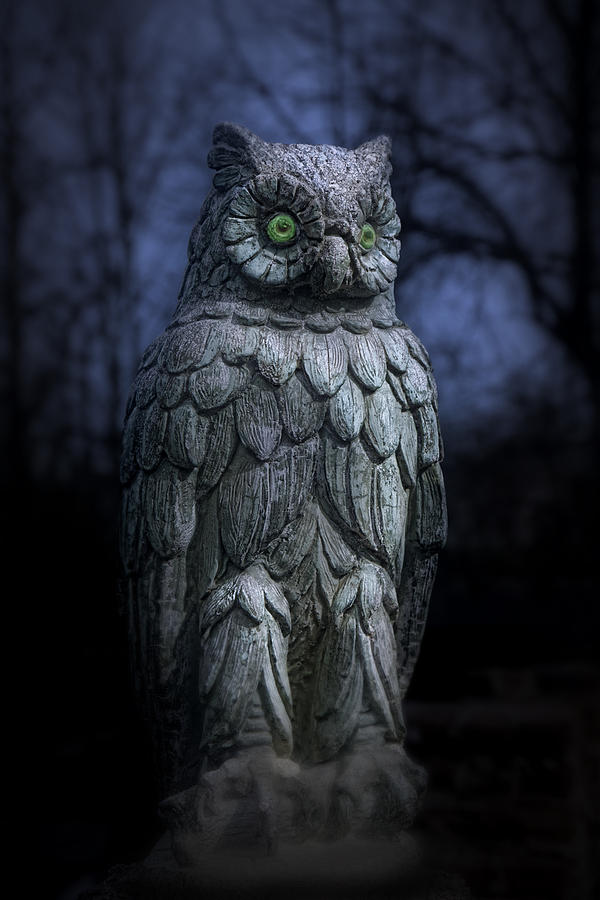 The Owl Photograph