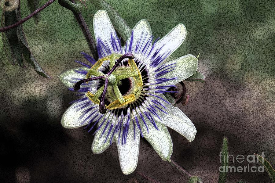 The Passion Flower In Abstract Photograph  - The Passion Flower In Abstract Fine Art Print