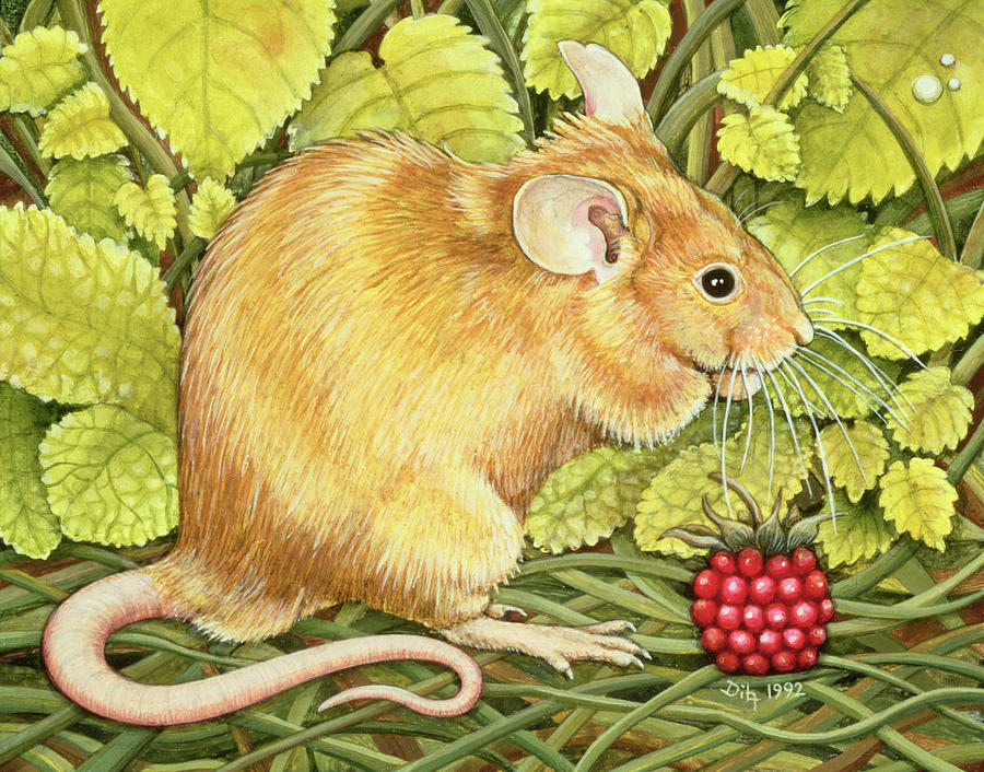 The Raspberry-mouse Field Mouse; Raspberry Painting - The Raspberry Mouse by Ditz