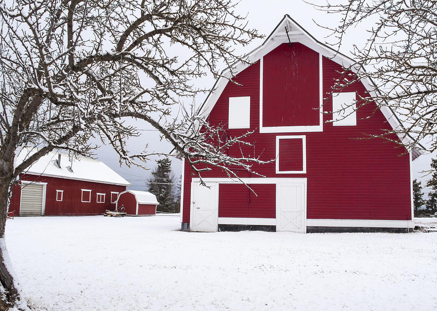 The Red Barn Photograph  - The Red Barn Fine Art Print