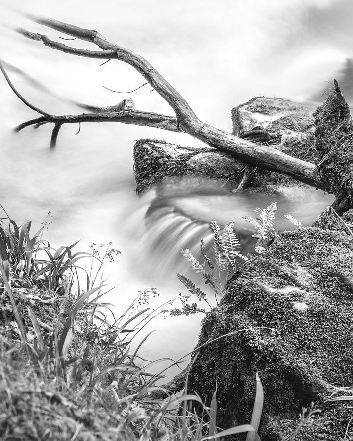 The Riverbank Photograph