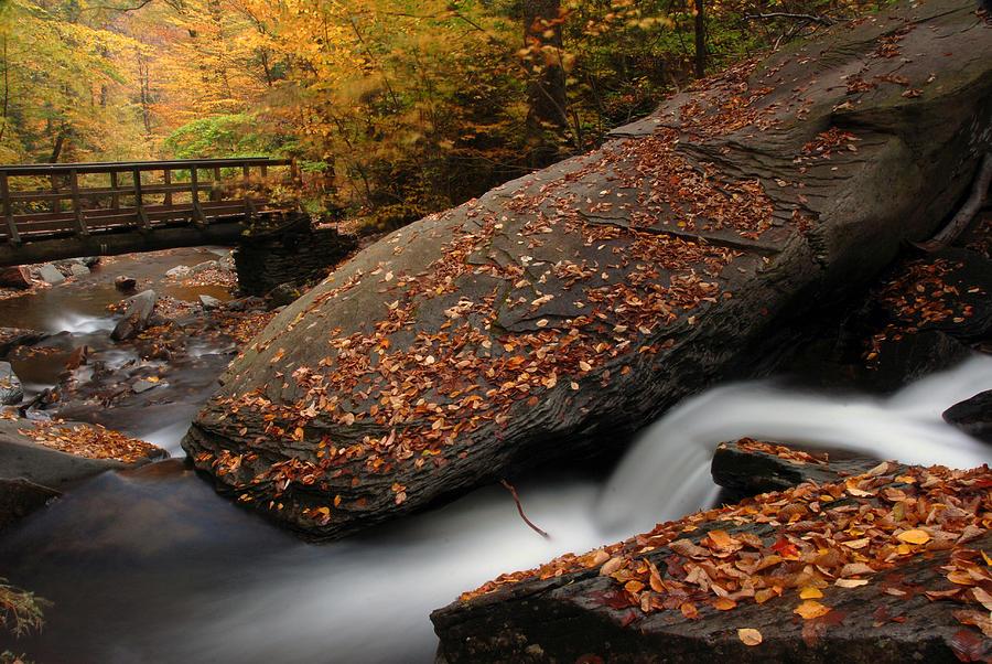 Ricketts Glen Photograph - The Rock by Dan Myers