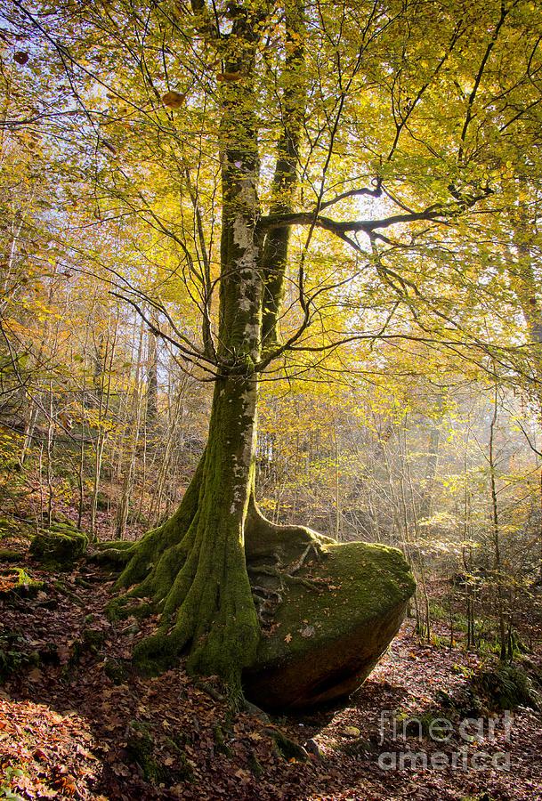 The Rock Tree Photograph