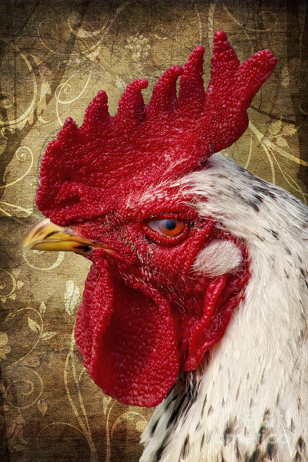 Rooster Photograph - The Rooster by Angela Doelling AD DESIGN Photo and PhotoArt
