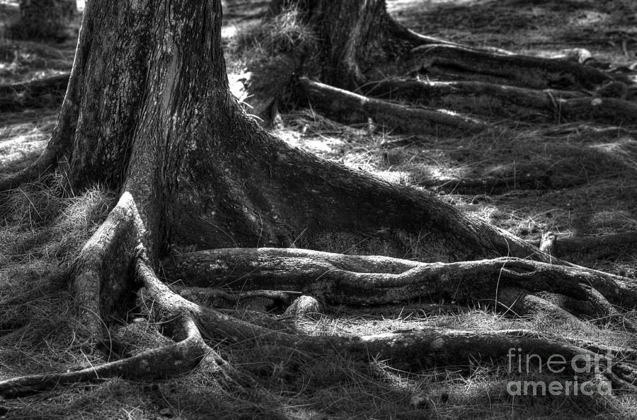 The Roots Photograph  - The Roots Fine Art Print