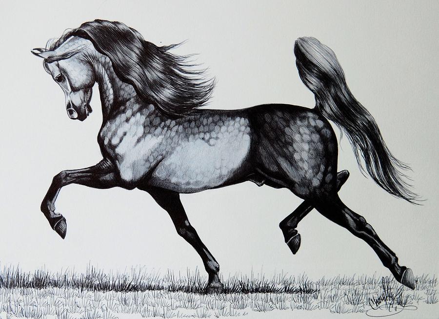 The Spirited Arabian Horse Drawing by Cheryl Poland