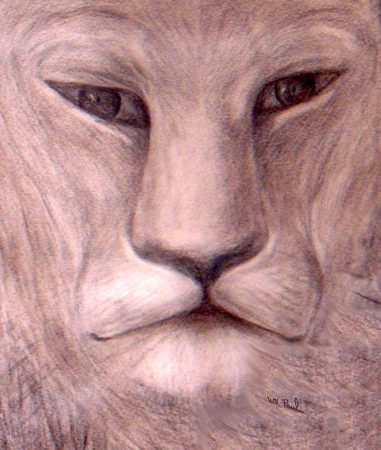 The Stare Drawing  - The Stare Fine Art Print