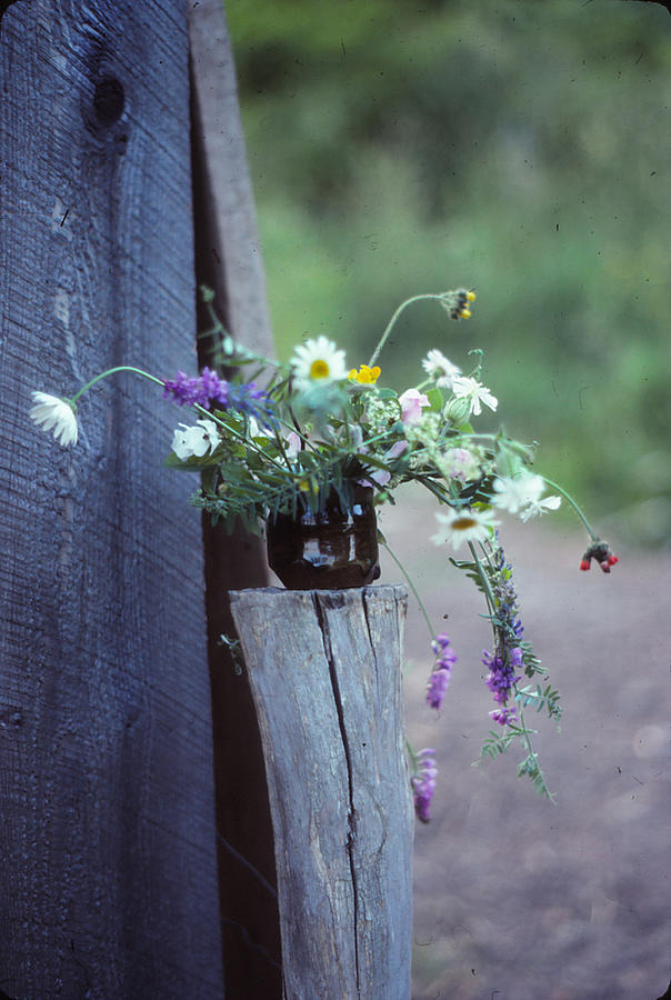 The Still Life Of Wild Flowers Photograph