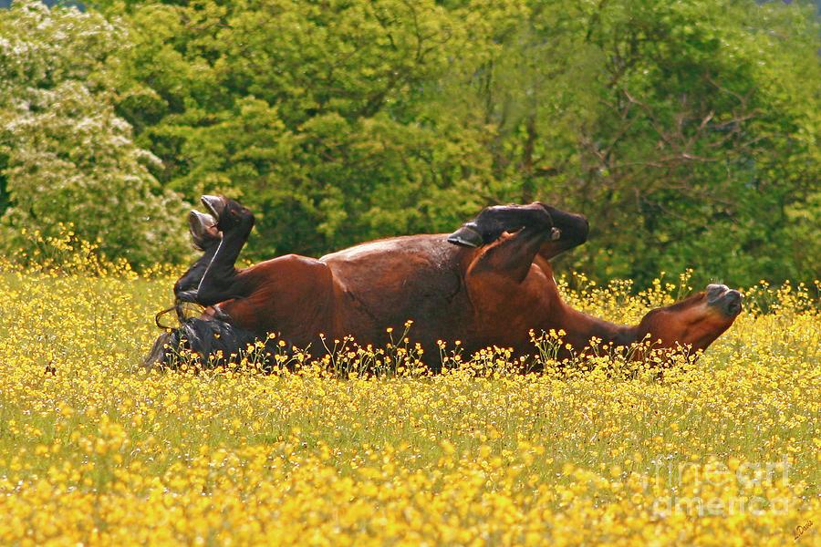 Horse Photograph - The Sun Worshipper by Wobblymol Davis
