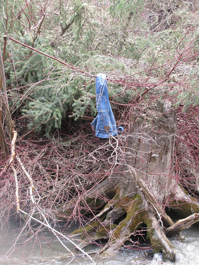 Pair Of Levi Jeans Found Hanging On A Branch By The Grey's River Photograph - The Swim by Shawn Hughes