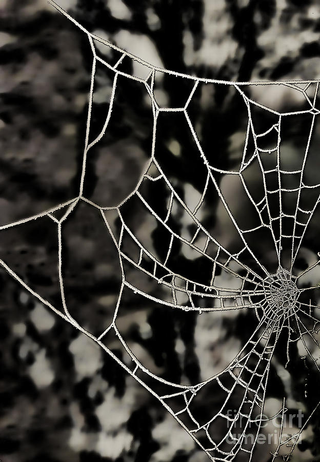 The Tangled Web Photograph