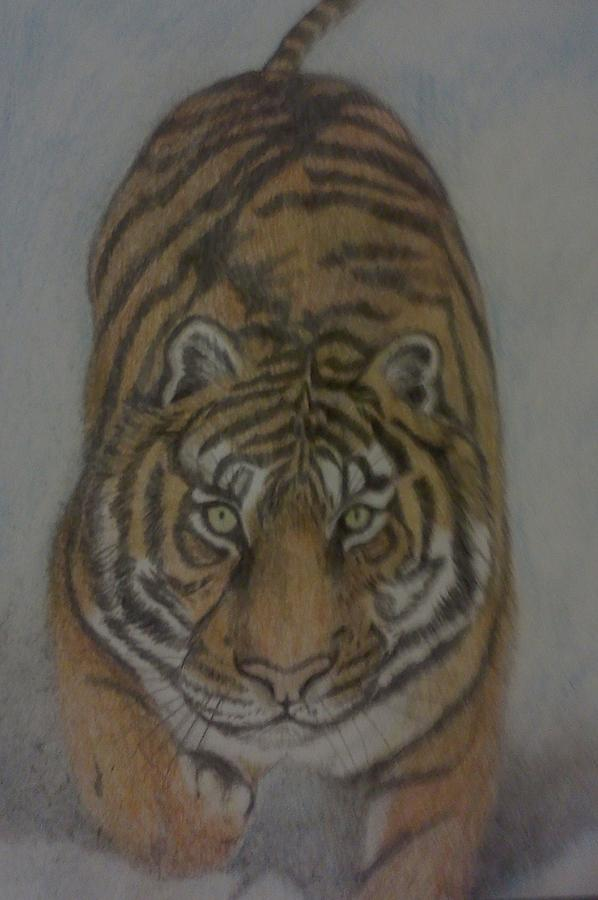 The Tiger Drawing