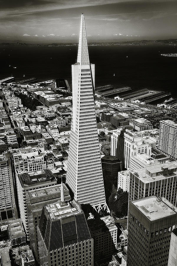 The Transamerica Pyramid Photograph  - The Transamerica Pyramid Fine Art Print