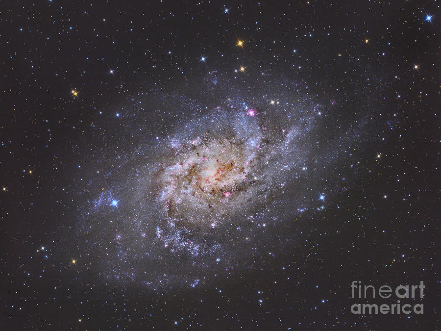 The Triangulum Galaxy Photograph  - The Triangulum Galaxy Fine Art Print