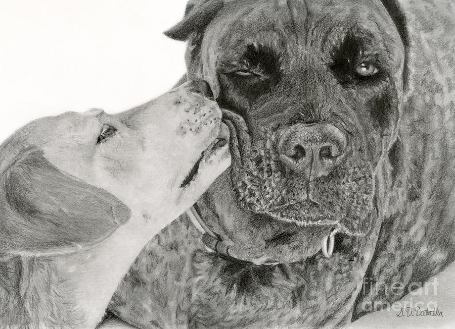 The Unconditional Love Of Dogs Drawing  - The Unconditional Love Of Dogs Fine Art Print