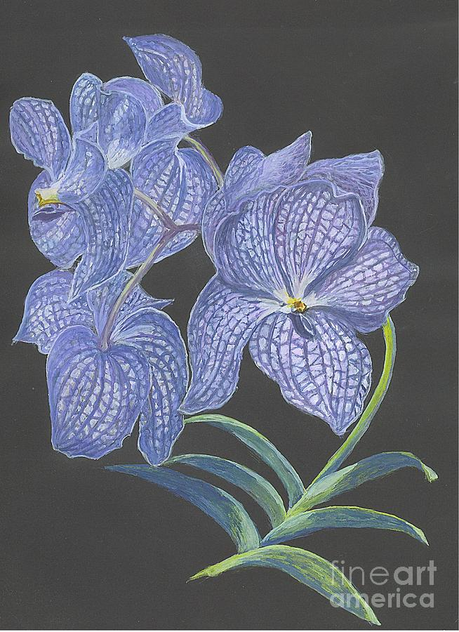 The Vanda Orchid Painting