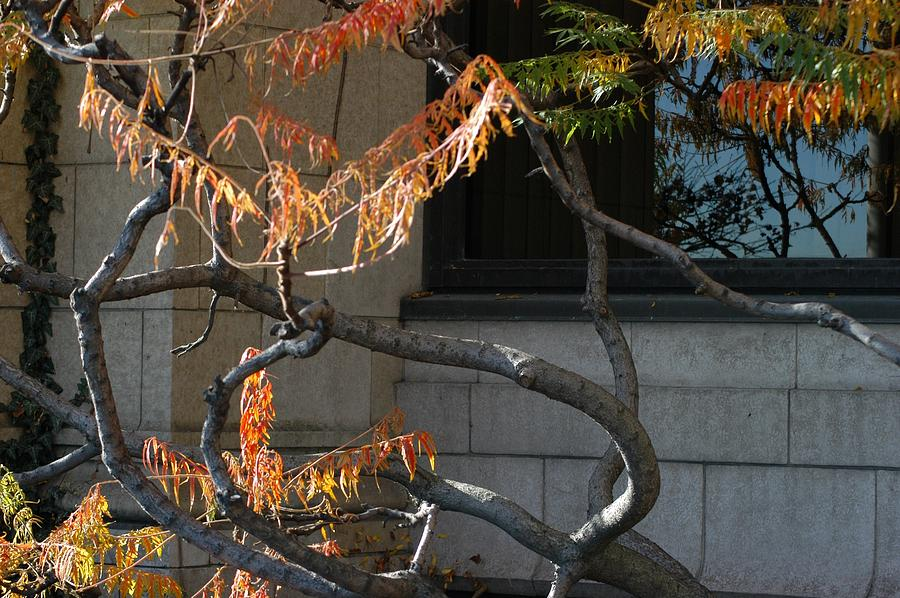 Branches Photograph - The View by Joseph Yarbrough