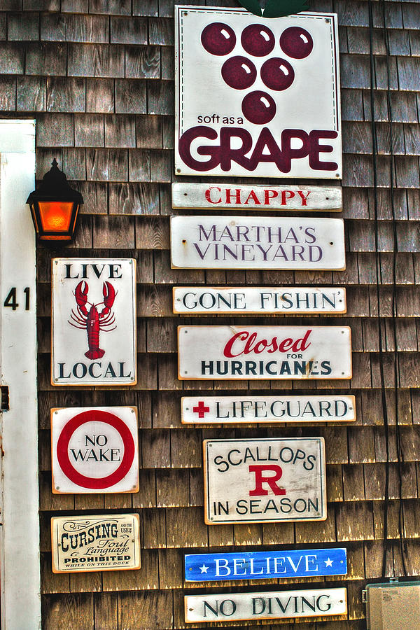 The Vineyard Photograph